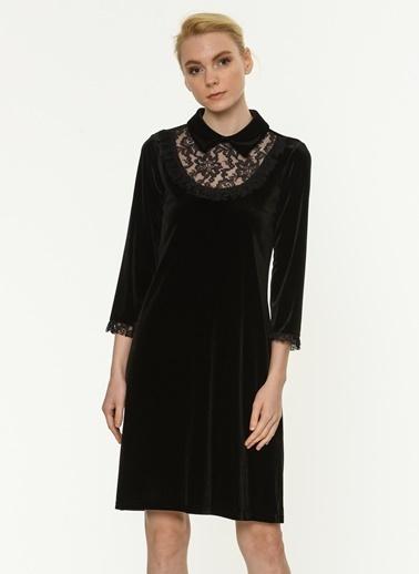 Yakası Dantelli Kadife Elbise-Jus De Pommes